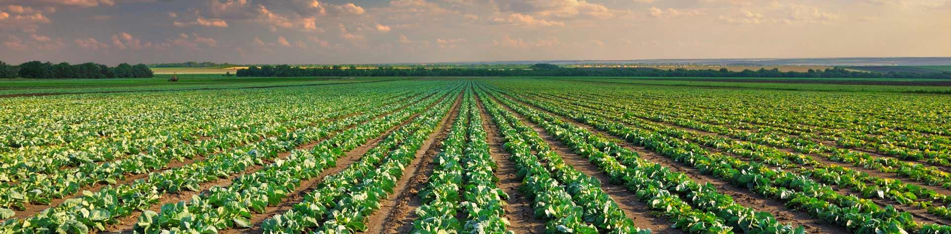 Oferta para la empresa agrícola