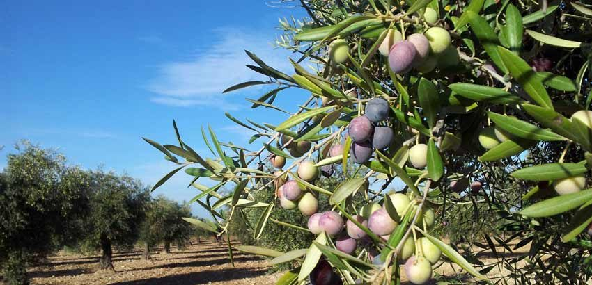 Nueva Política agrícola común (PAC)